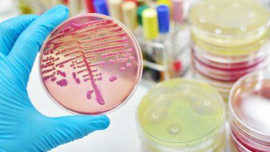 Photo of Anuncian alianza de Roche y SpeeDx, en pruebas de resistencia a antibióticos
