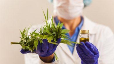 Photo of ITESM y Khiron, realizarán Curso de Cannabis Medicinal en línea