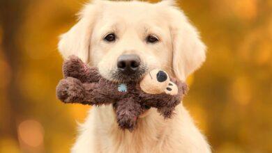 Photo of ¿Qué emociones experimentan los perros?