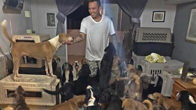 """Photo of Hombre que resguardó a 300 perros en su casa pide ayuda tras paso de Huracán """"Delta"""""""
